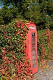 call box covered by vine in great britain poster