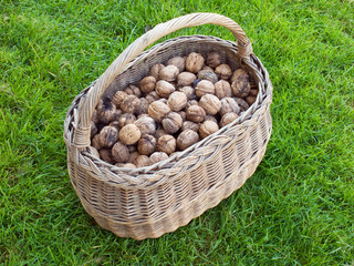Walnuts in the basket