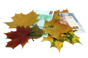 Euro together with yellow leaves on a white background