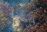 Medusa in water. poster