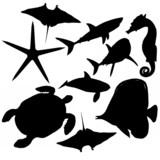 Fototapety Aquatiques101