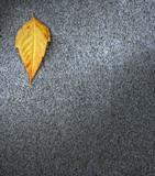 Leaf on asphalt,autmn seasonal period poster