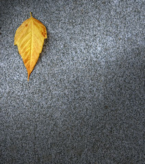 Leaf on asphalt,autmn seasonal period
