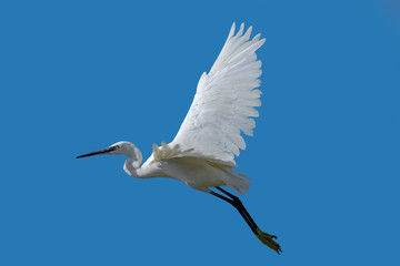 The white heron flies on the sky