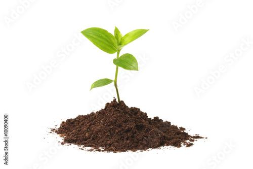 Canvas Planten Young plant