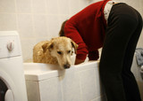 Woman washing her pet dog in the bathtub of her home poster