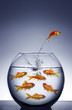 .goldfish jumping out of the water from a crowded bowl