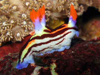 Nudibranco 1