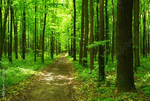 Zdjęcia na płótnie, fototapety na wymiar, obrazy na ścianę : forest