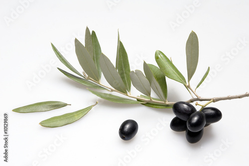 Ramoscello d 39 olivo immagini e fotografie royalty free su for Acquisto piante olivo