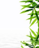 bamboo with reflection in the water,Zen atmosphere.