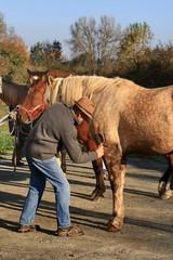 soins au cheval