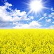 Sonne, Himmel und Rapsfeld