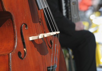 Sound of woods: double bass detail