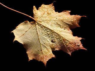 Blatt im Herbst mit Wassertropfen