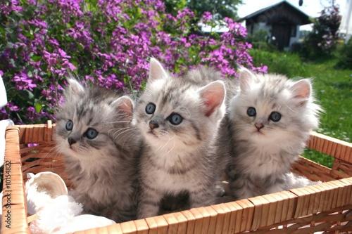 Gysmo, Toulouse & Luna