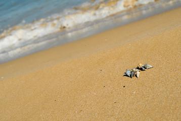 spiaggia conchiglie