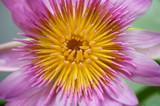 Beautiful Botanical Lily poster