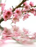 Fototapete Aromatisch - Hintergrund - Blume