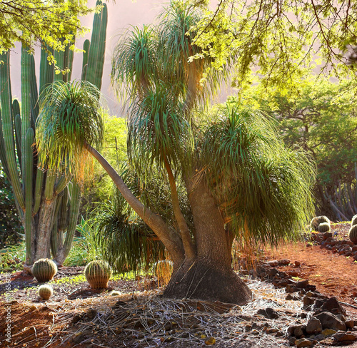 A photo of a desert tree in Hawaii