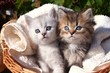 ein flauschiges Geschwisterpärchen