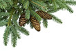 fir tree branches,christmas decoration