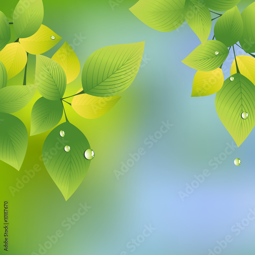 Summer leaf, vector illustration