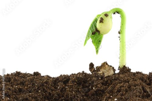 plante qui pousse photo libre de droits sur la banque d 39 images image 10197223. Black Bedroom Furniture Sets. Home Design Ideas