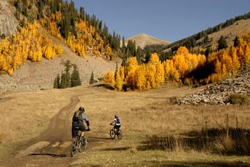 Mountain biking with Aspen trees