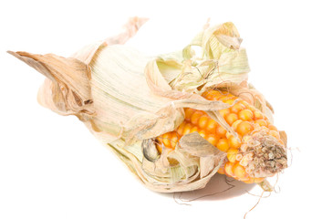 close-up single dried corn, isolated on white