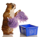 dog standing up with pompoms encouraging recycling poster
