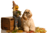 cocker spaniel puppy sitting in autumn leaves poster