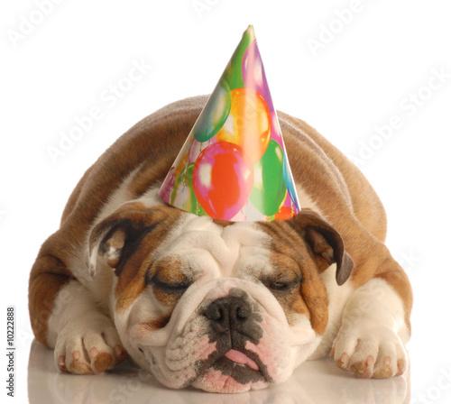 english bulldog wearing birthday party hat