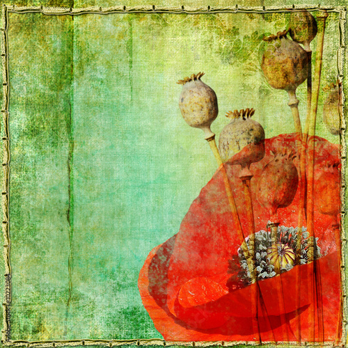vintage paper with poppy flowers