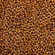 decorative leopard texture