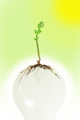 Young green plant growing on light bulb