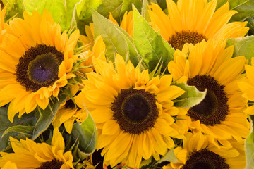 A spring bouquet of orange sunflowers