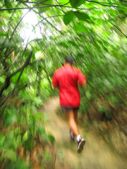 Jogging On a Forest Trail