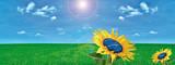 Fototapety fotovoltaico