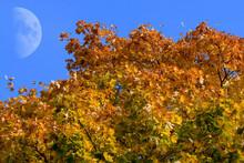 Der Mond am blauen Herbsthimmel