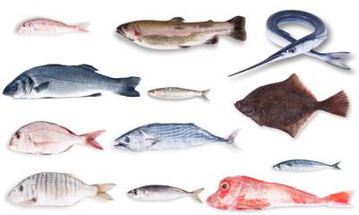 pesce gastronomia
