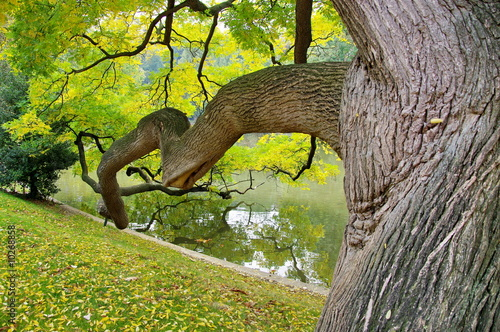 branche d 39 arbre monumentale photo libre de droits sur la banque d 39 images image. Black Bedroom Furniture Sets. Home Design Ideas