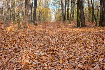 autumnal park.