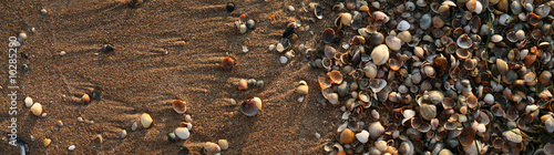 Many colored shells on the sea sand..