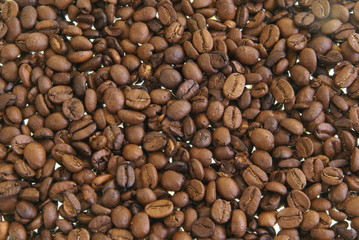Whole coffee beans background texture or design element