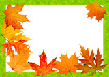 autumn maple-leaf, scope for a postal on a white background poster