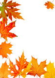 autumn maple-leaf, frame for a postal on a white background poster