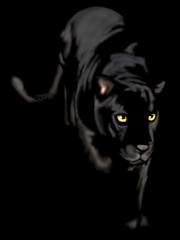 black panther of night