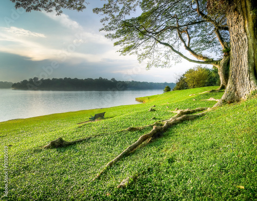 Grassy Banks Under Large Tree at Sunset