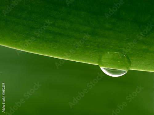 Leinwandbild Motiv Close-up of a plant leaf
